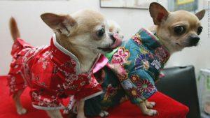 Japan's boom in weird wearable tech